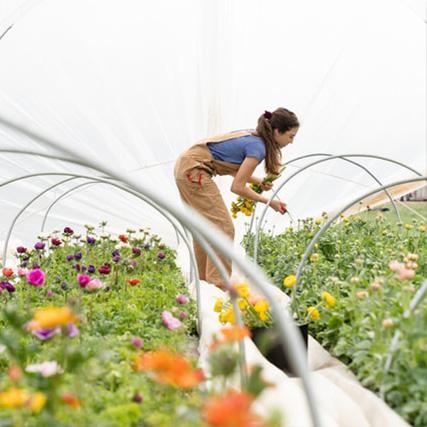 jeune fille penchée sur une culture de fleurs